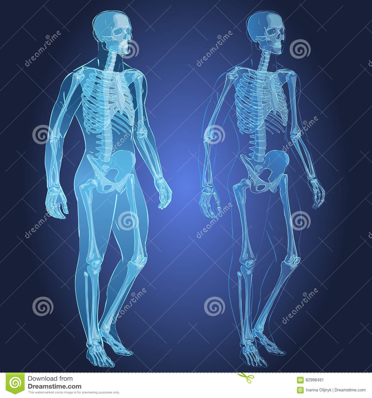 Human Body And Skeleton Stock Vector Illustration Of Physical