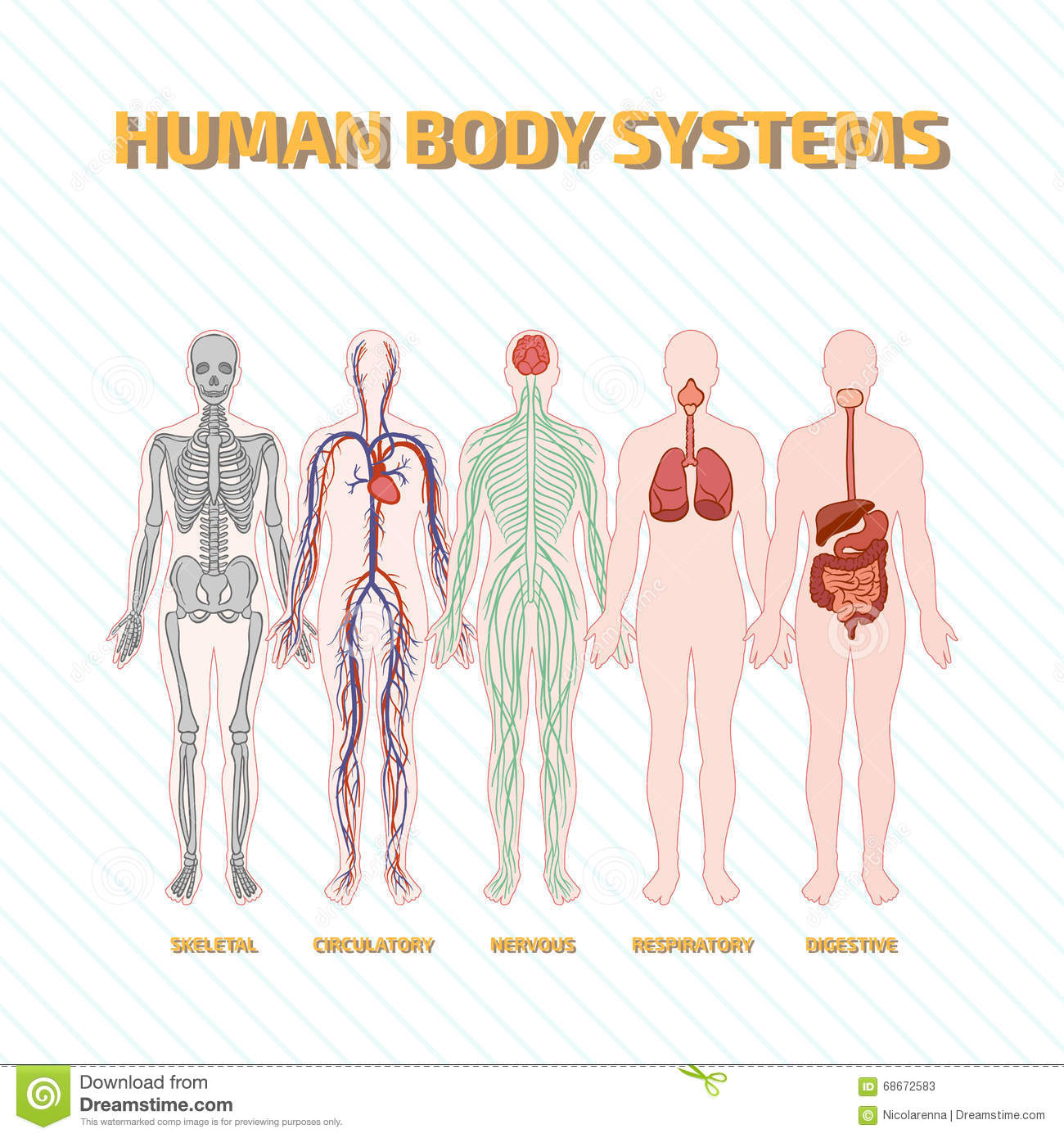Download this free picture about Human Body Circulatory System from Pixabays vast library of public domain images and videos