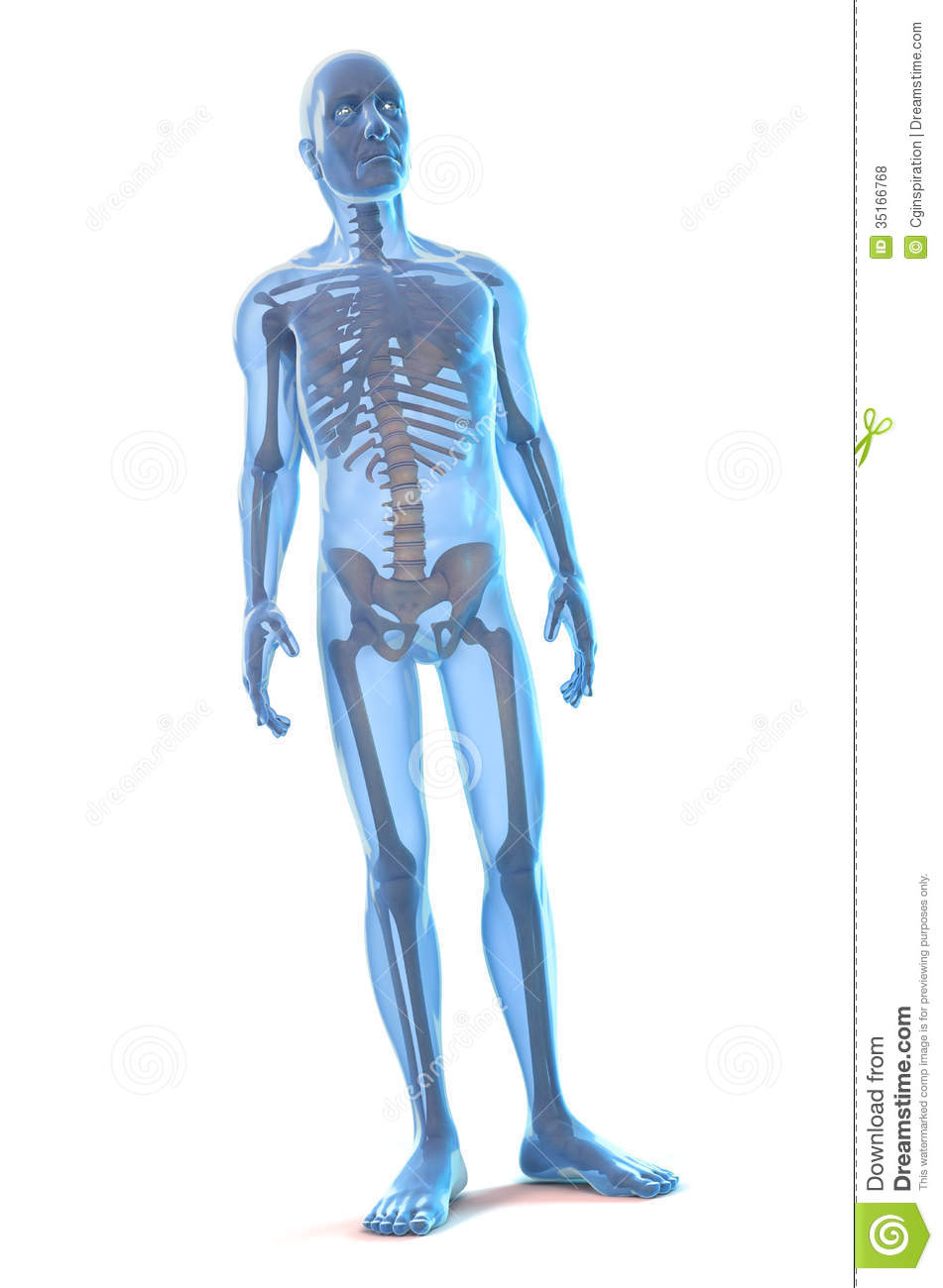 Human Body stock photo. Image of blue, standing, muscular ...