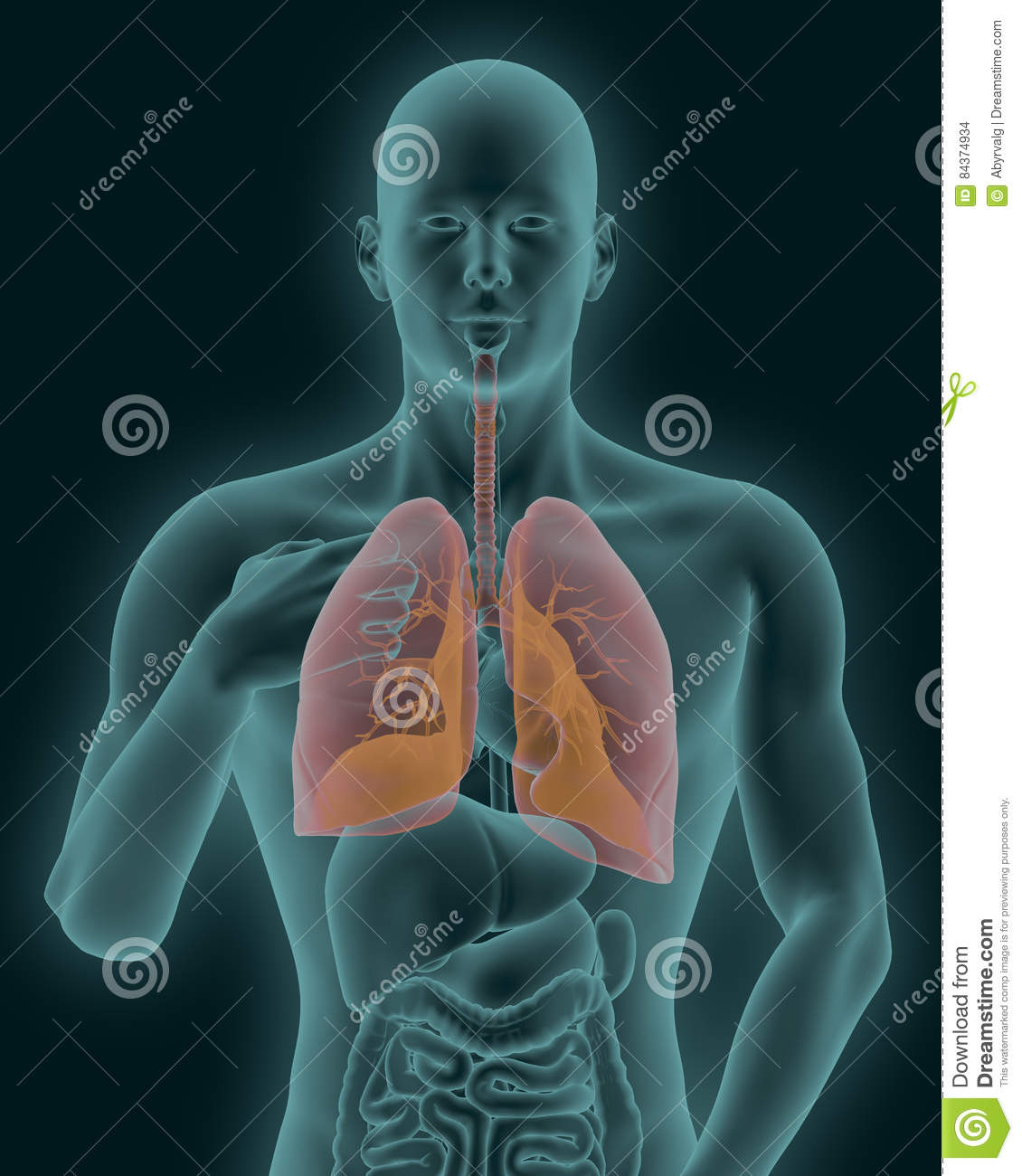 Human Body With Visible Inflamed Lungs 3d Render Stock Illustration ...