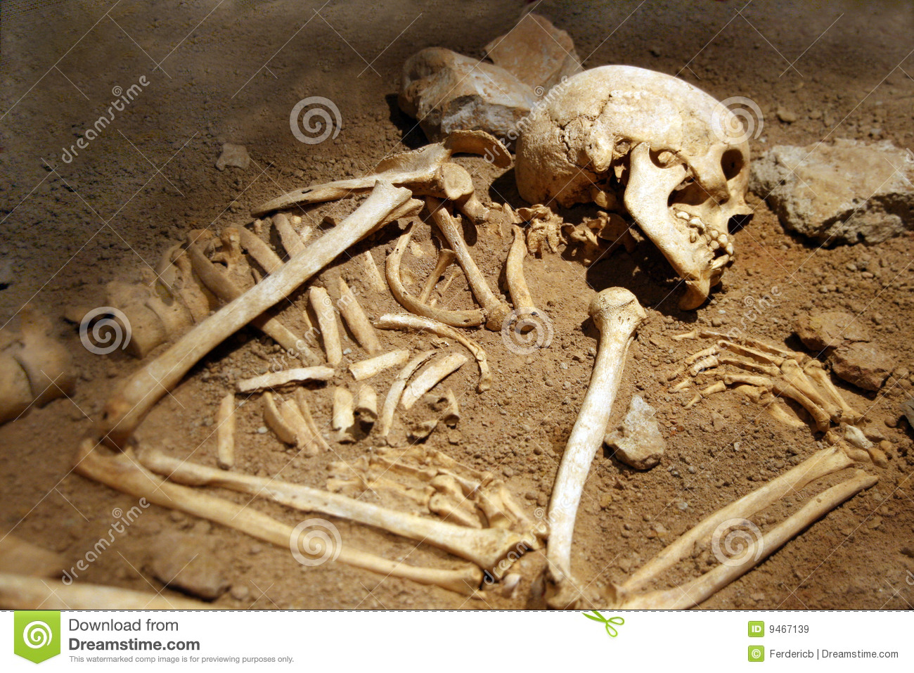 Human Bones Royalty Free Stock Images - Image: 9467139