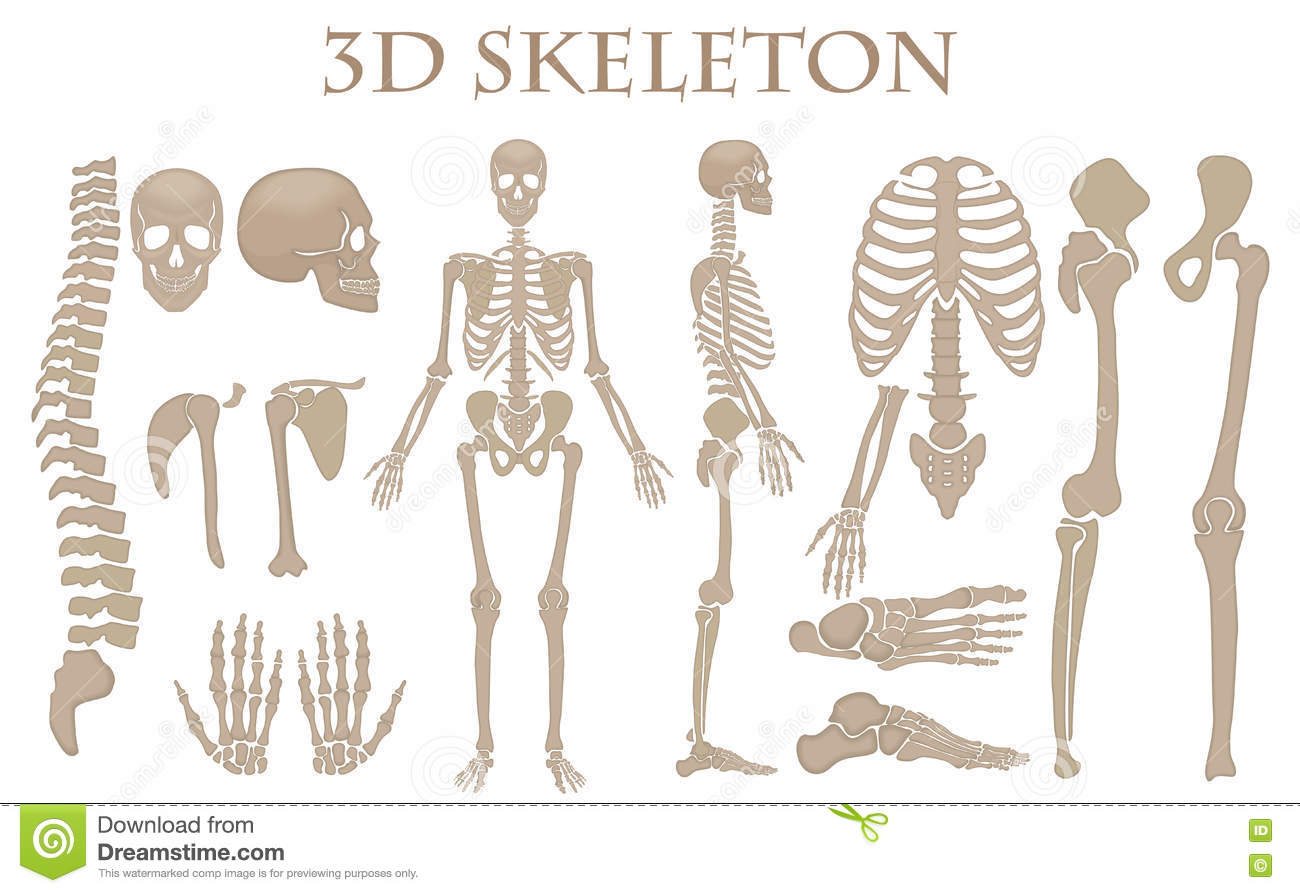 how to draw a realistic skeleton