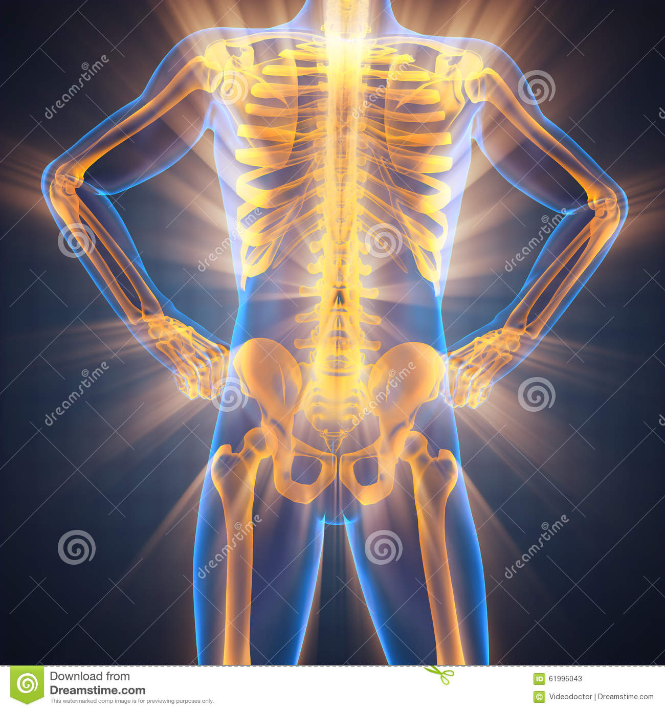 Human Bones Radiography Scan Image Stock Image Image Of Chest