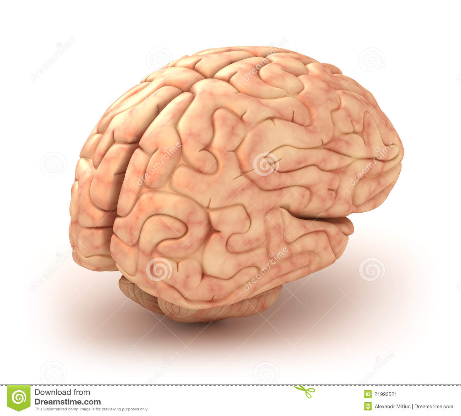 Human Brain 3D Model Stock Illustration. Illustration Of