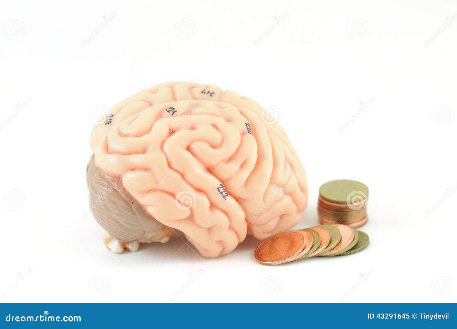 Human Brain Stock Image Image Of Nerve Memory Intelligence 43291645
