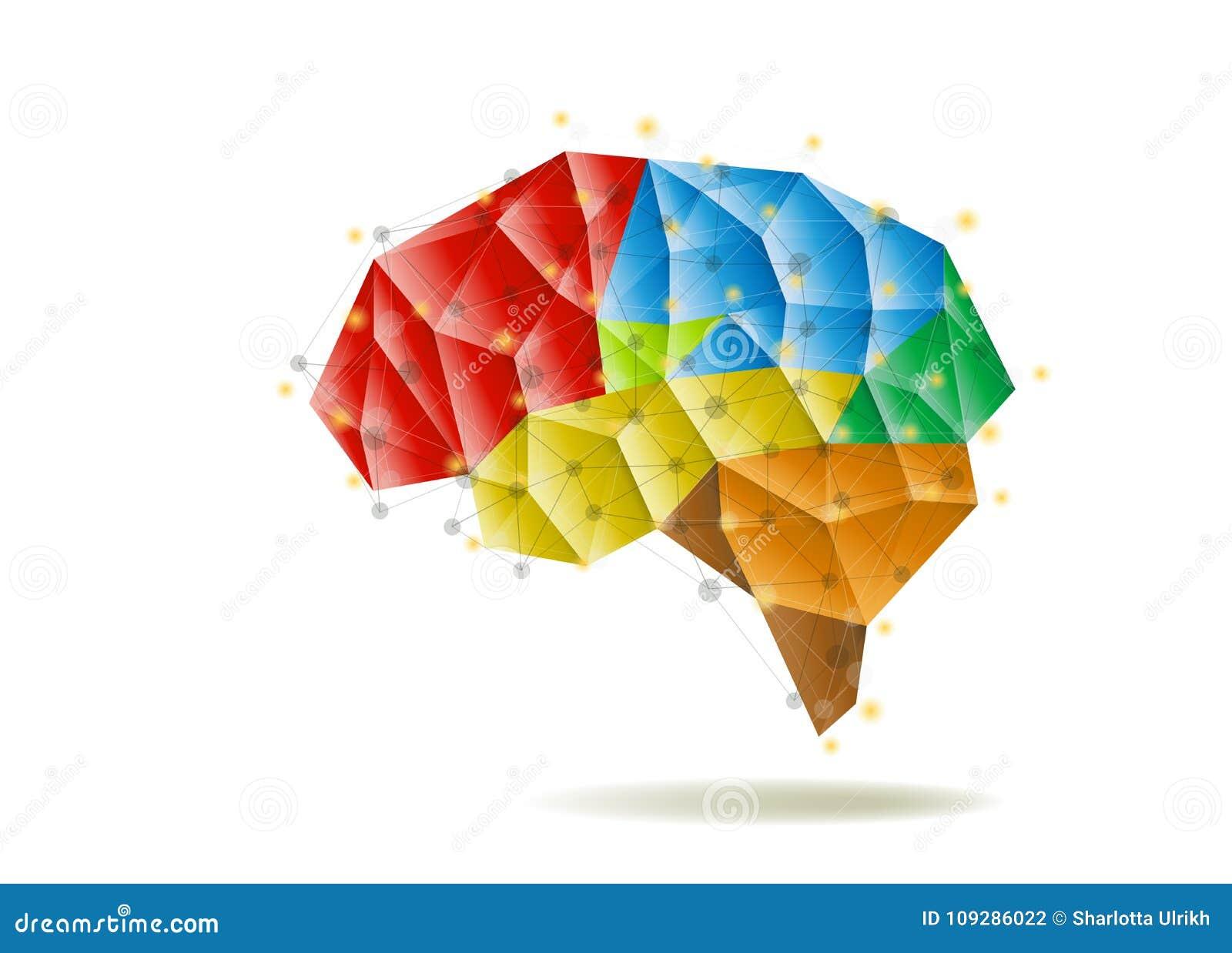 Human Brain Anatomy Structure Vector Illustration Stock Vector