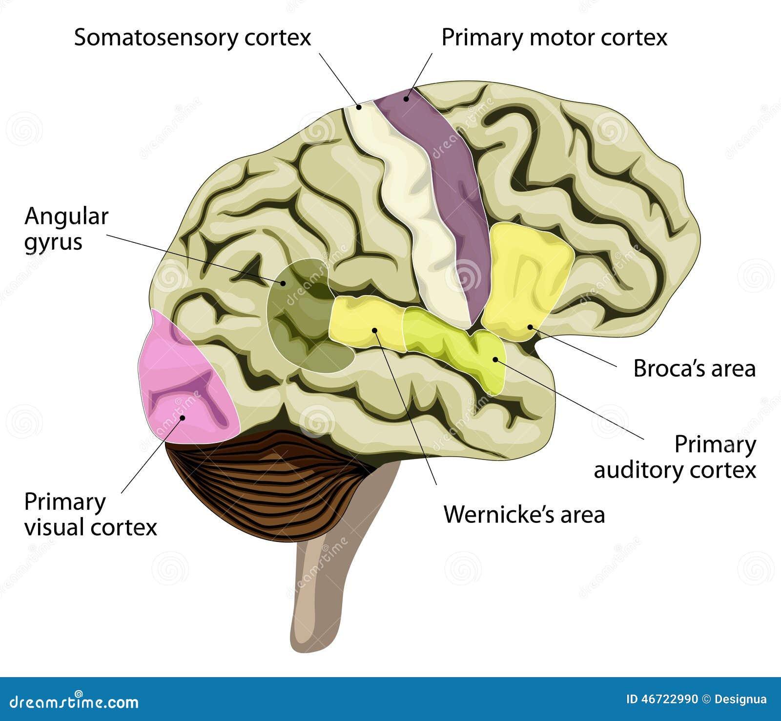 how to close a brain speech