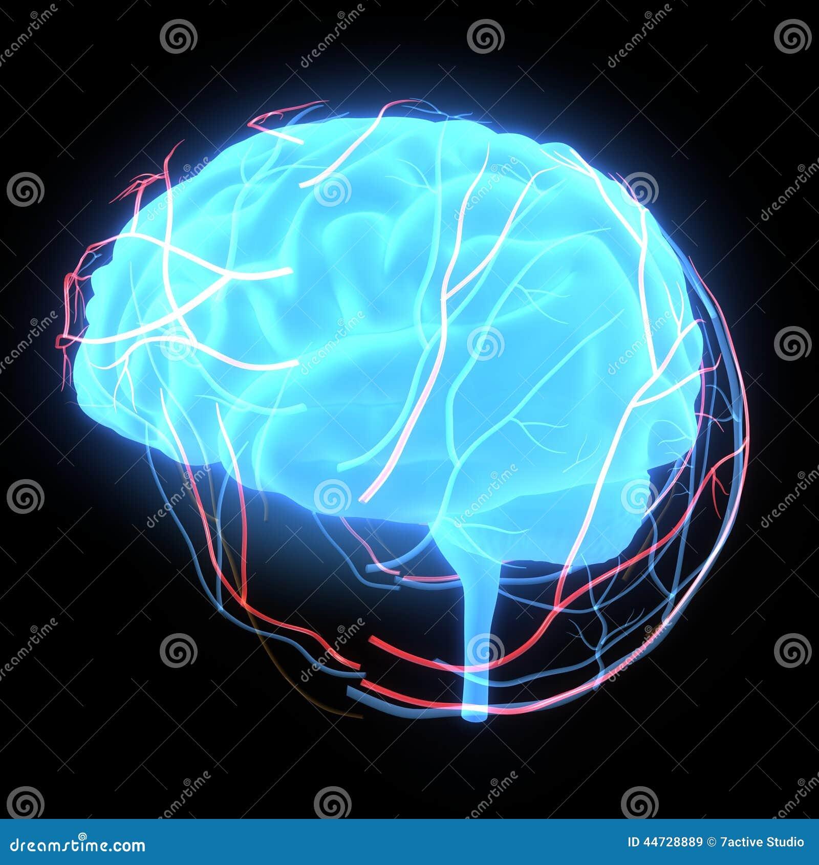 Human brain glow illustration 44728889 megapixl human brain glow ccuart Images