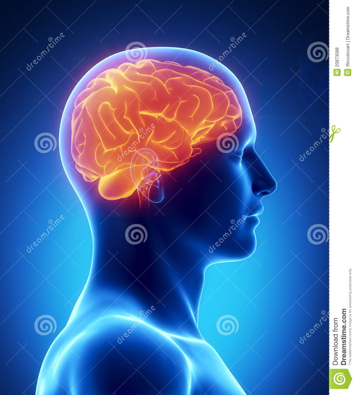 Human brain glowing lateral view