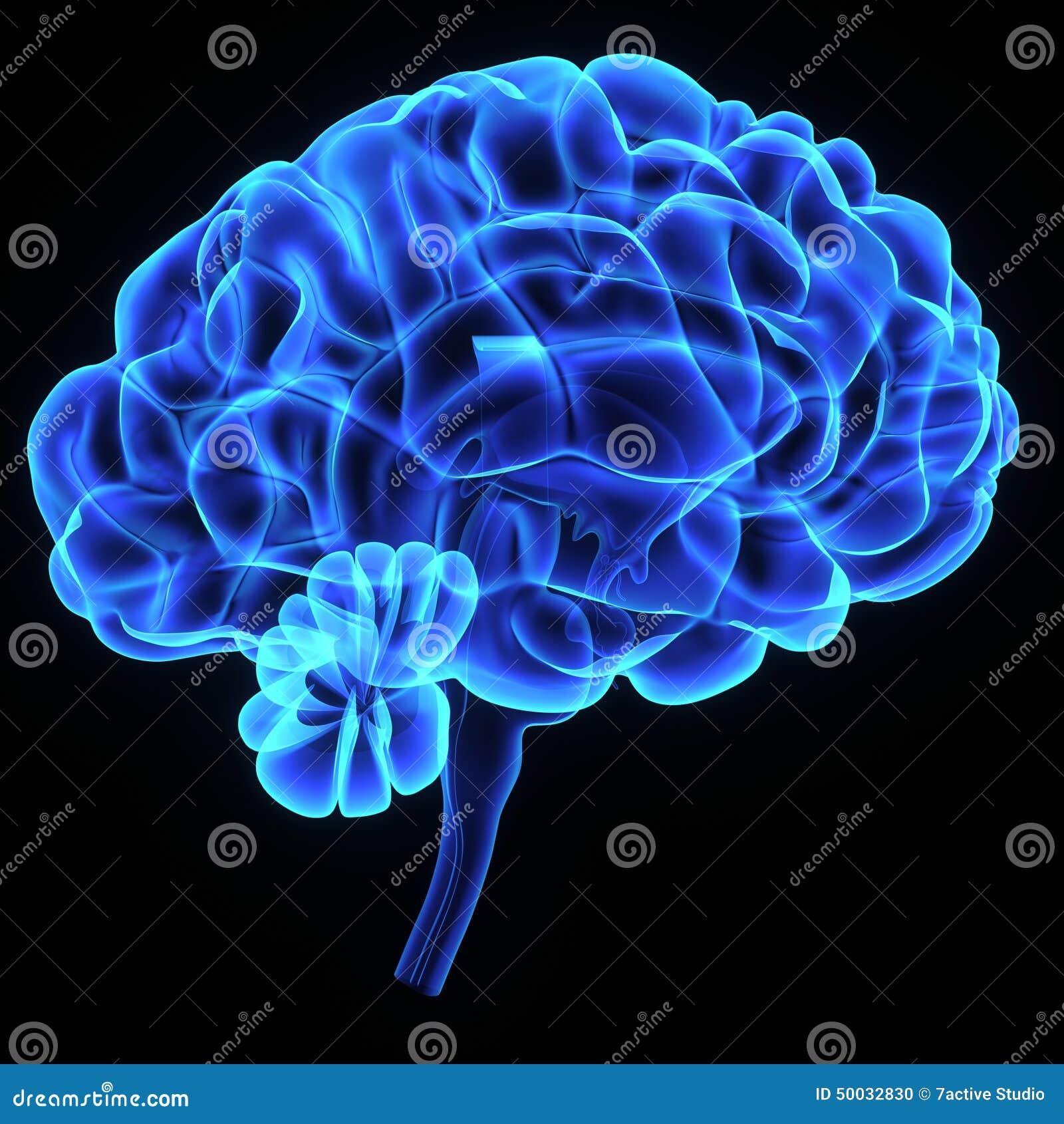 Human brain stock illustration illustration of left 50032830 download human brain stock illustration illustration of left 50032830 ccuart Images