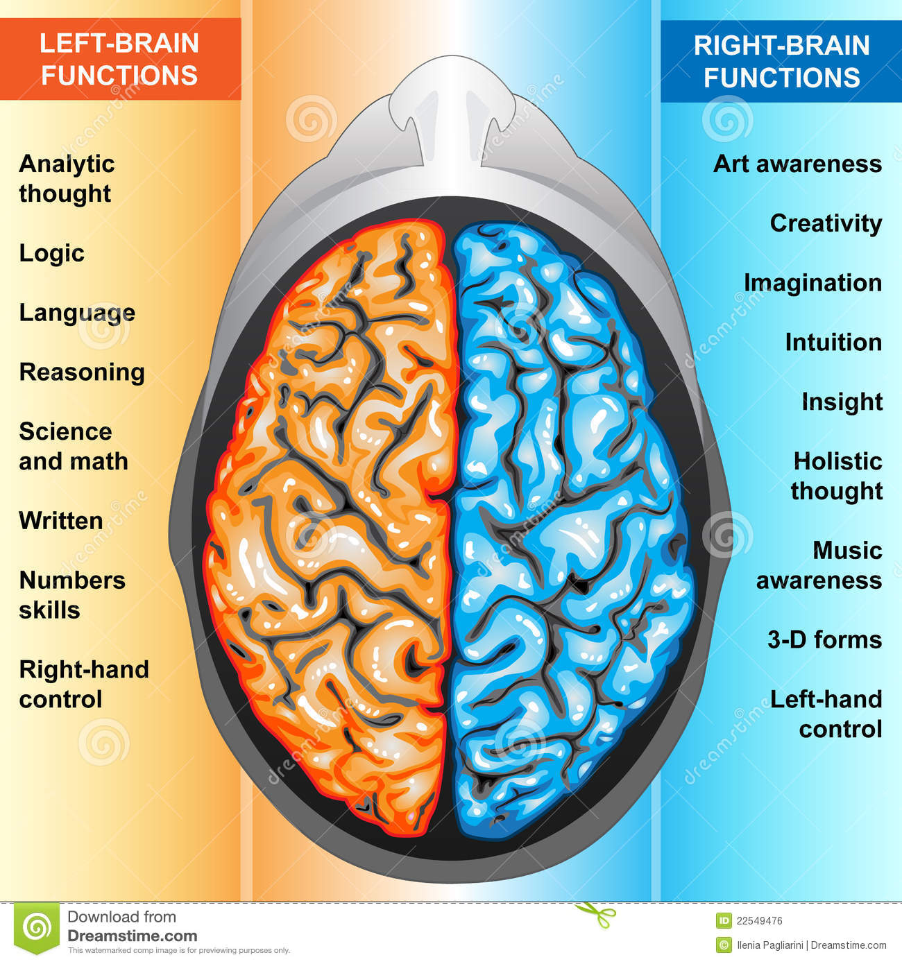Human Brain Left And Right Functions Stock Illustration ...