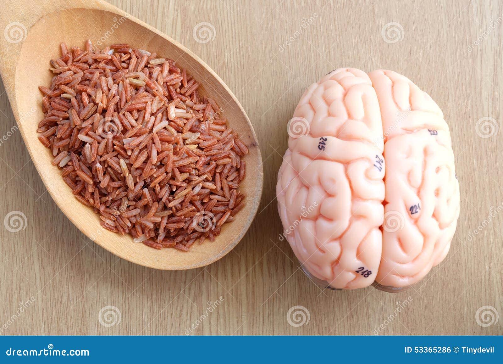 Human brain model stock photo. Image of brain, memory - 53365286