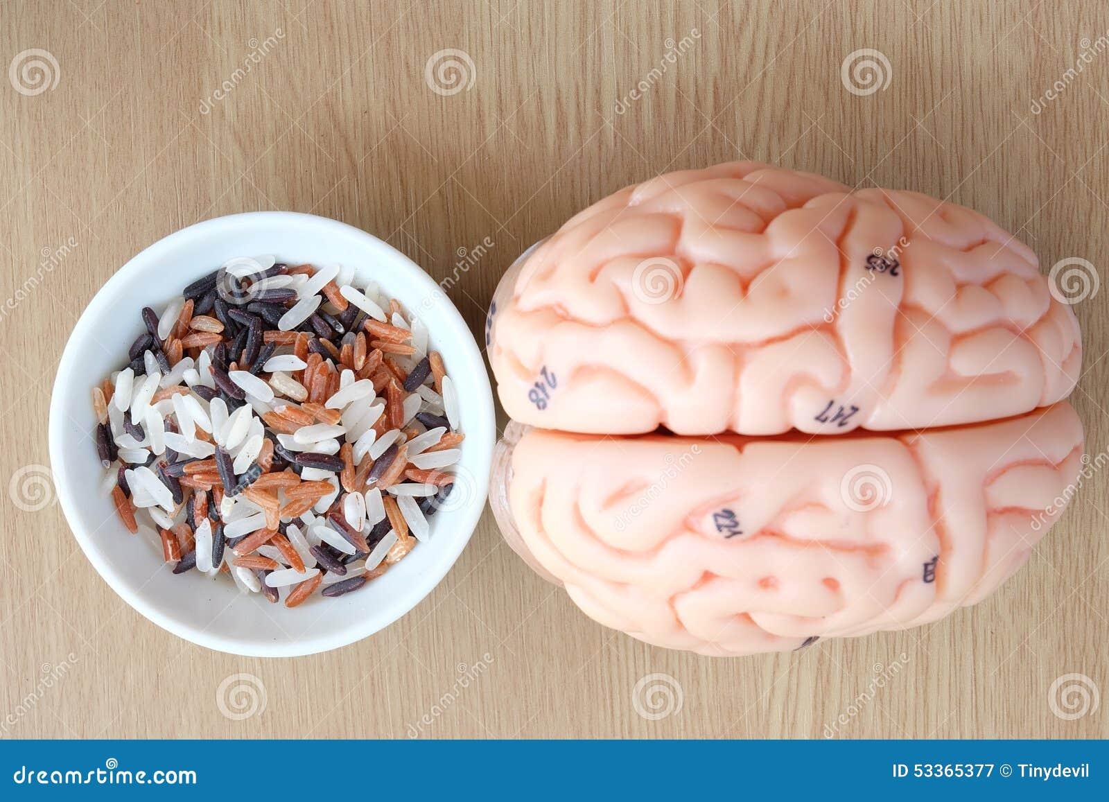 Human Brain Model Stock Image Image Of Intelligence 53365377