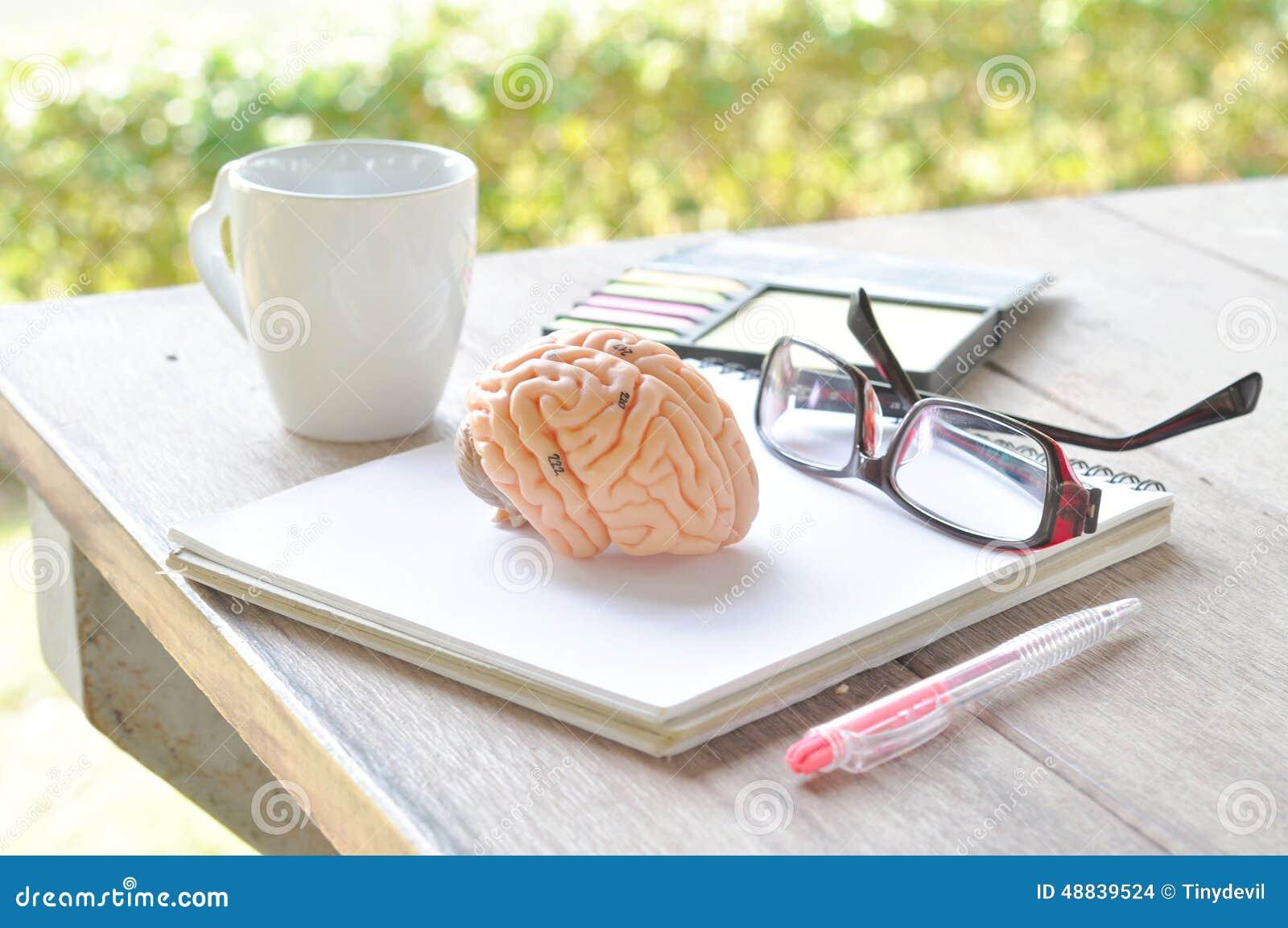Human Brain Model Stock Photo Image Of Organ Brain 48839524