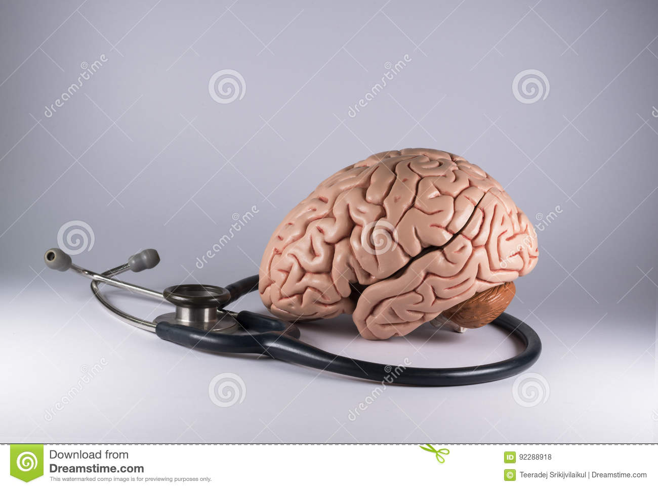 Human Brain Model And Stethoscope Stock Photo - Image of care, tools ...