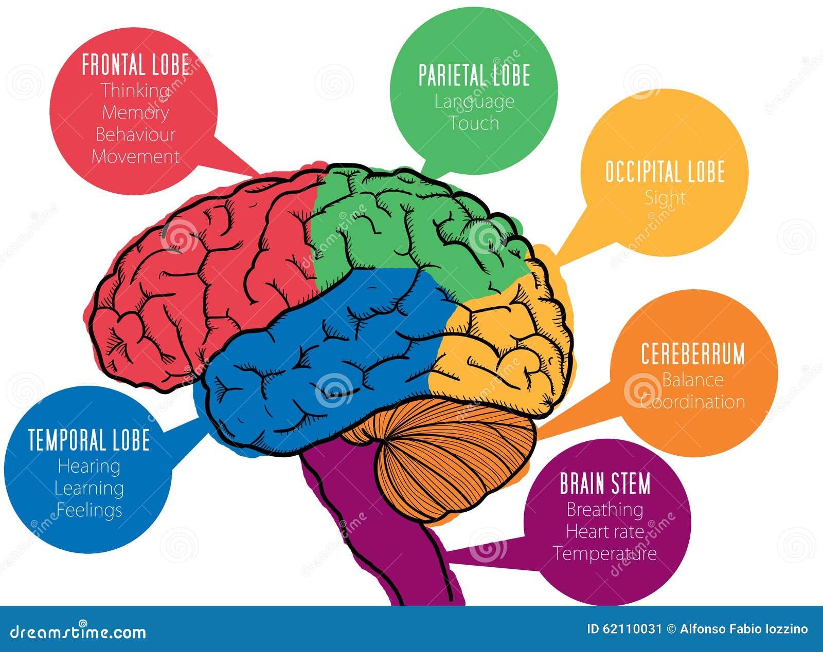 Brain Functions – louisan.info