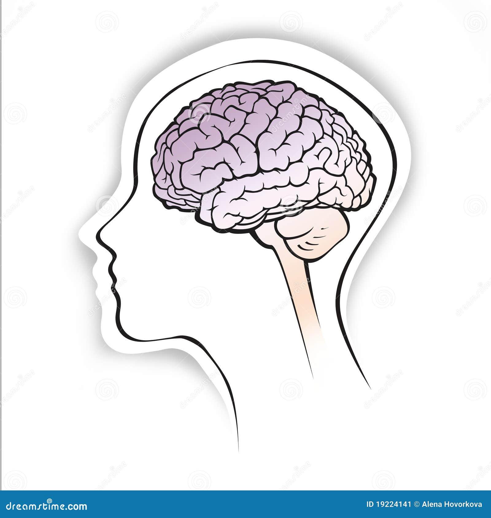 Simple Human Brain Diagram Schematics Wiring Diagrams