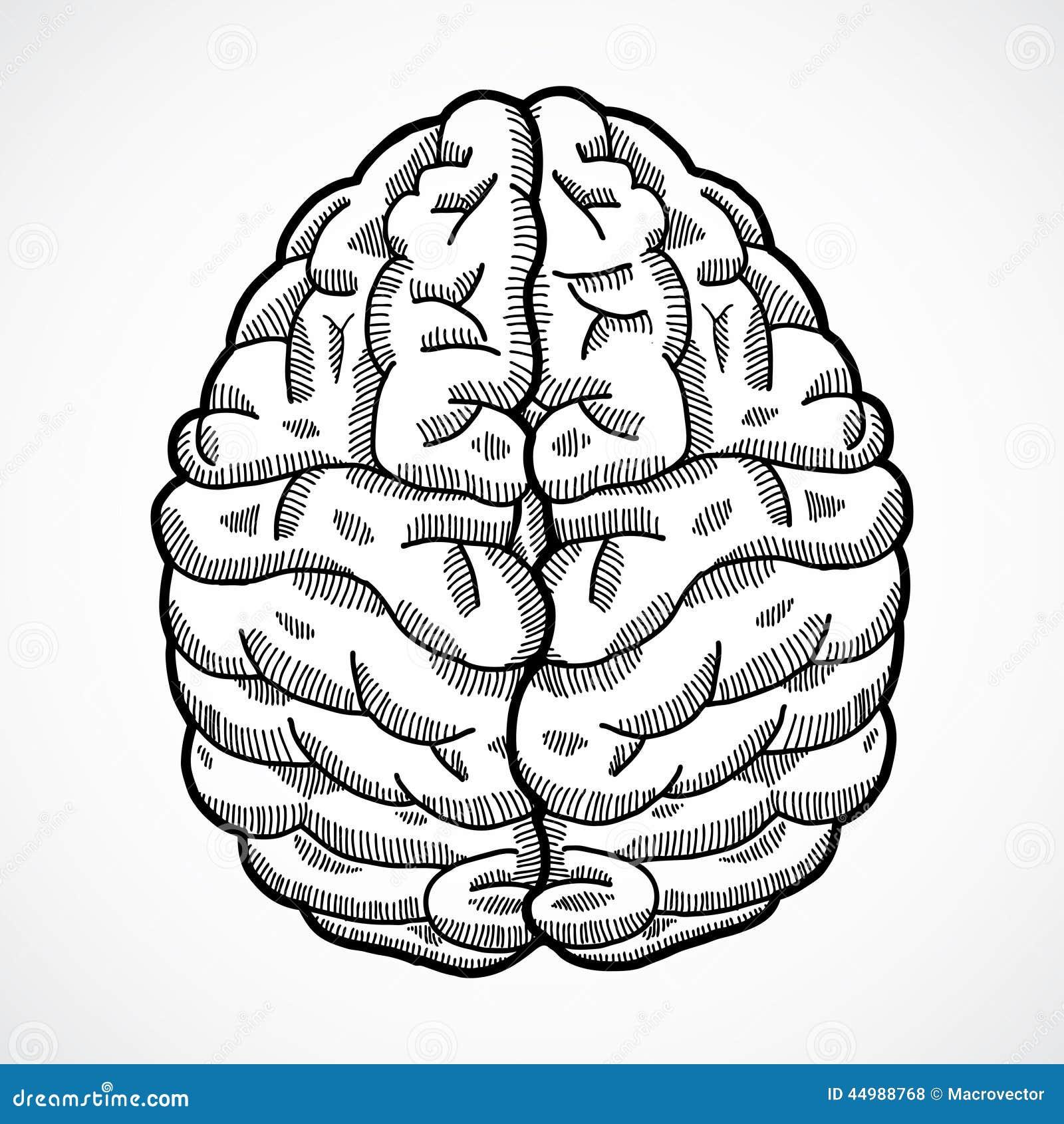brain top view vector - photo #13