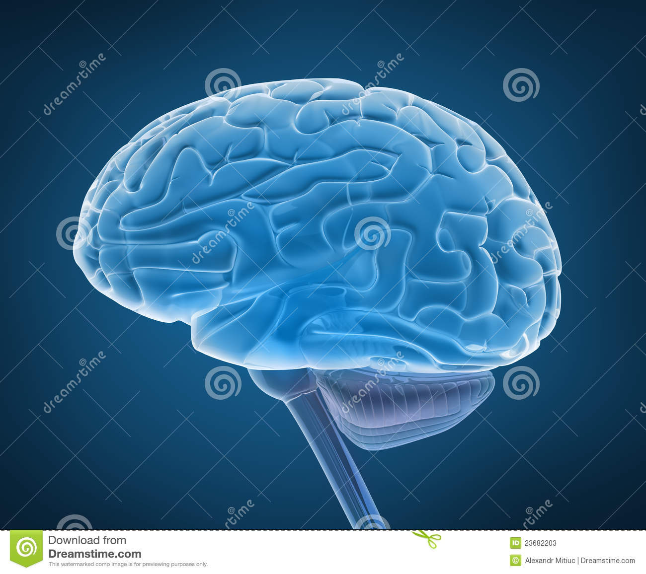 Human brain and spinal cord stock illustration illustration of human brain and spinal cord ccuart Gallery