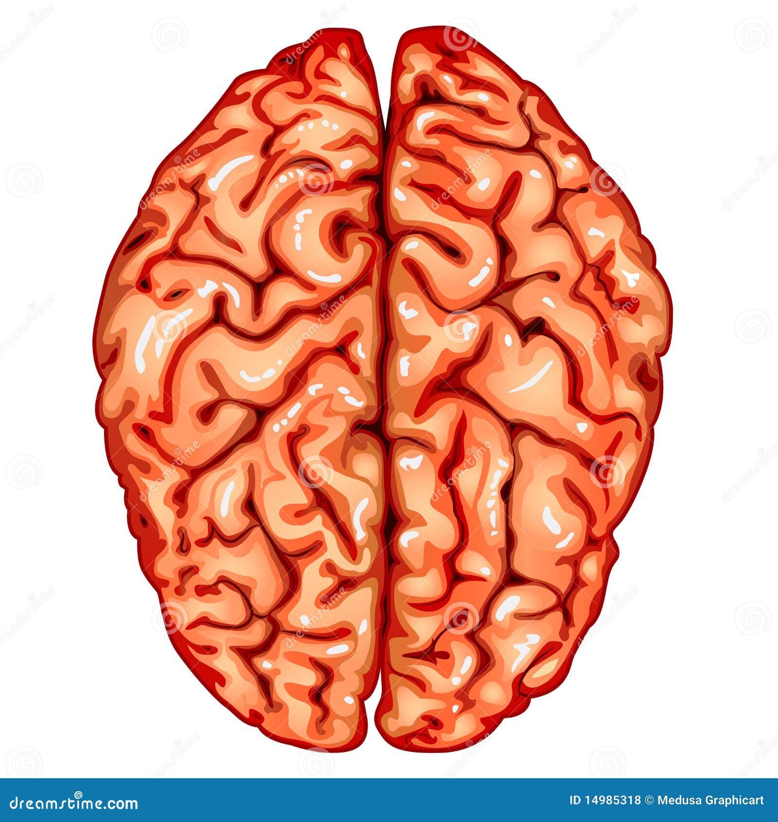 Фото мозг старого человека 7