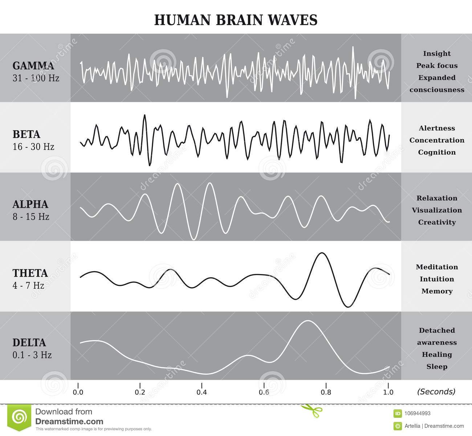 Human Brain Waves Diagram / Chart / Illustration