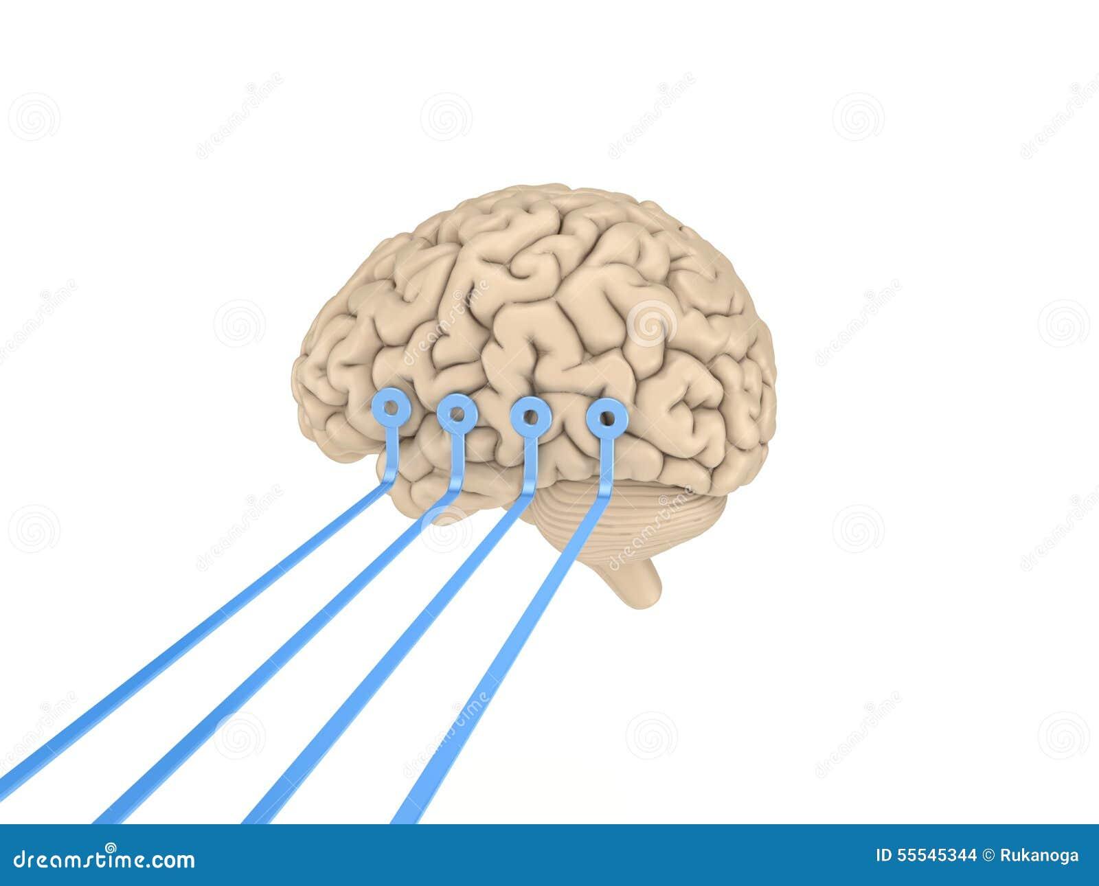 Human Brain Stock Illustration Illustration Of Connect 55545344