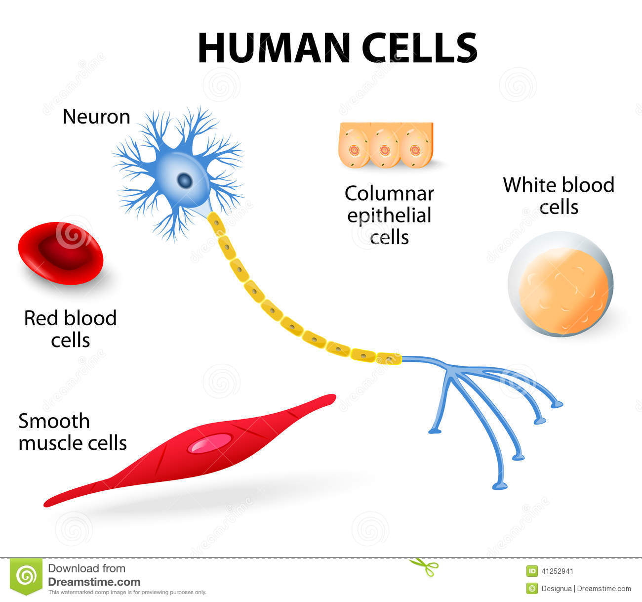 Human cell collection stock vector illustration of human 41252941 human cell collection ccuart Image collections