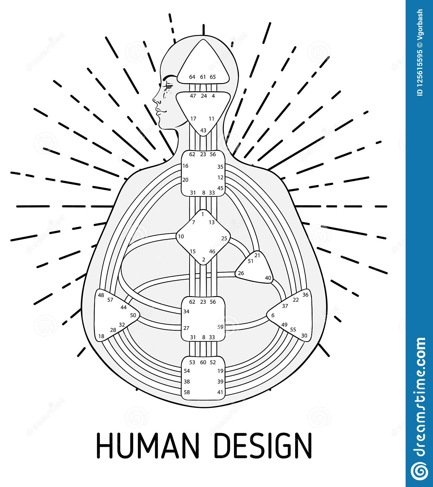 Human Design Bodygraph Chart Design Vector Isolated Illustration Stock Vector Illustration Of Esoteric Energy 125615595