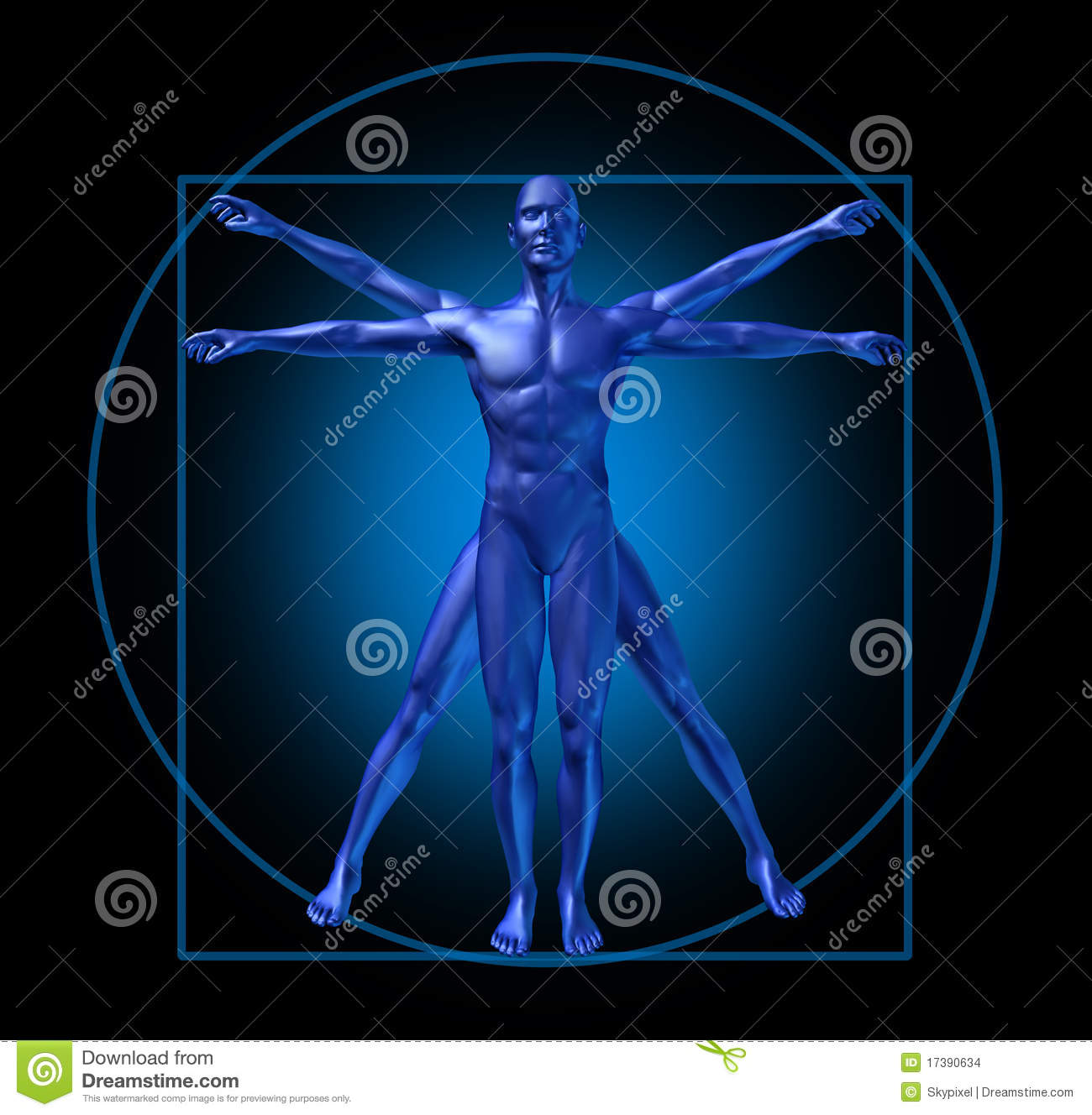 human diagram vitruvian man stock images image 17390634. Black Bedroom Furniture Sets. Home Design Ideas