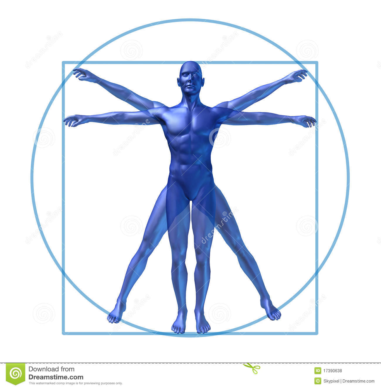 human diagram vitruvian man isolated 17390638