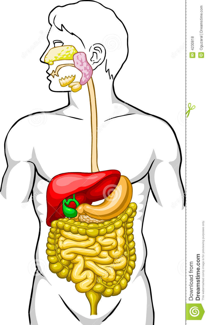 Tag: digestive system human body video free download ...