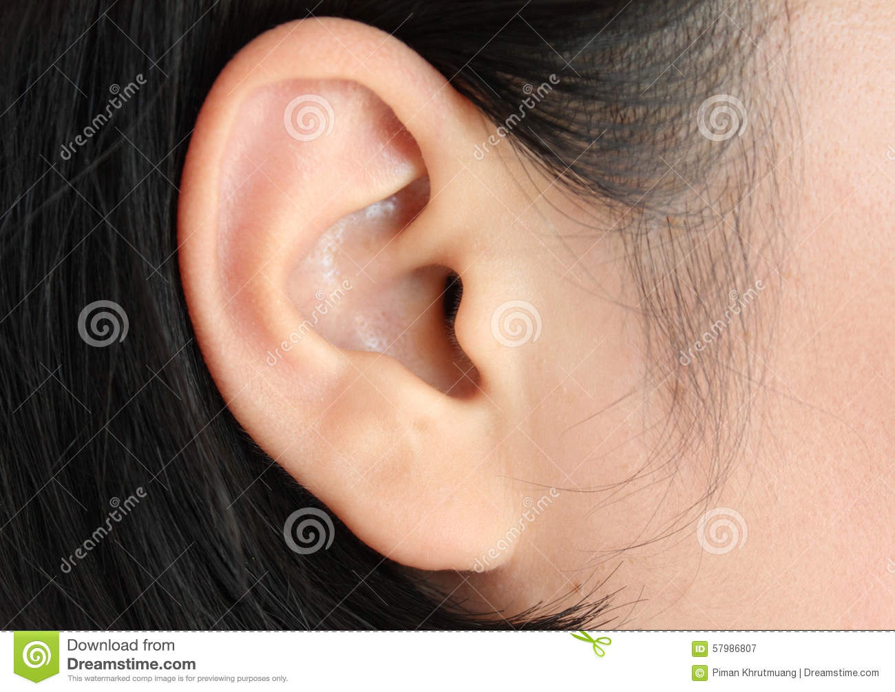 The Ear (Human Anatomy): Picture, Function, Definition ...