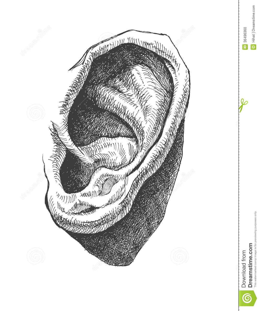 Human Ear. Realistic Hand Drawn Vector. Eps8 Stock Photo ...
