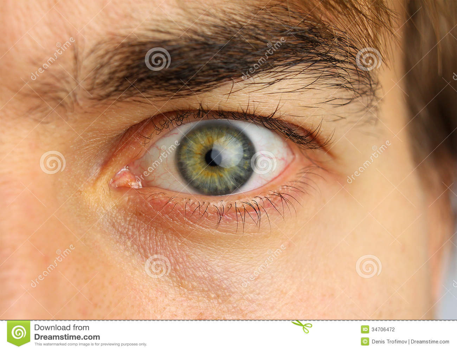 Human Eye And Eyebrow Close Up Stock Photo Image 34706472