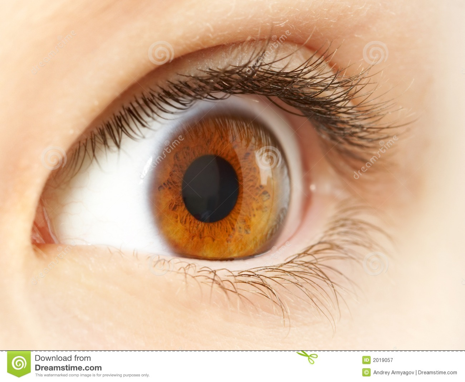 Human Eye. Macro Shooting Royalty Free Stock Photography - Image ...