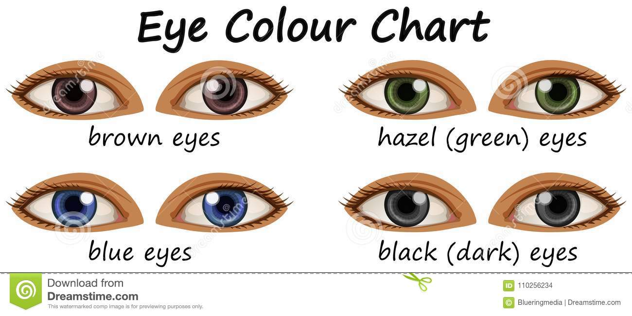 Human Eyes With Different Colors Stock Vector Illustration Of