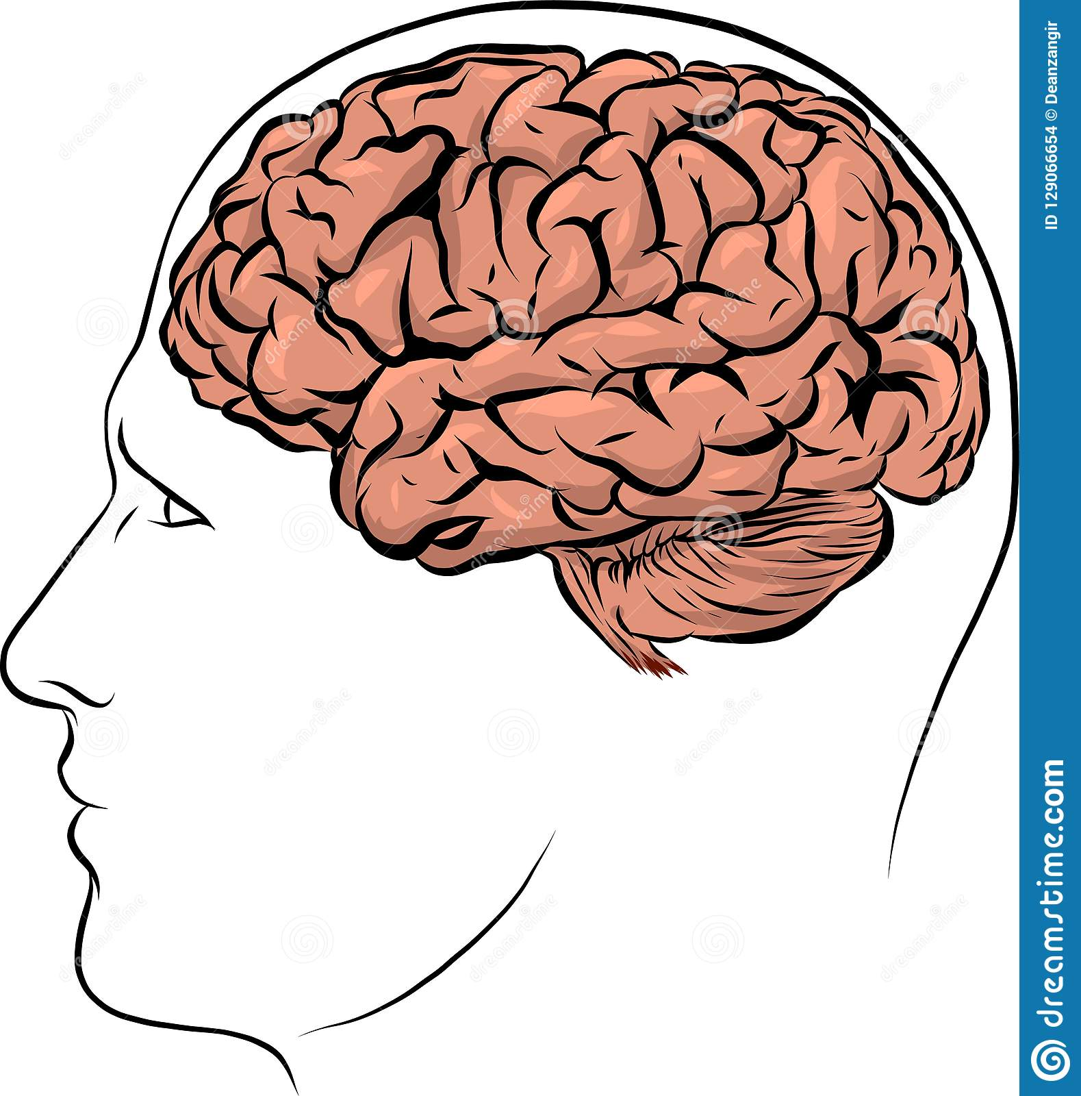 human face brown silhouette with brain inside