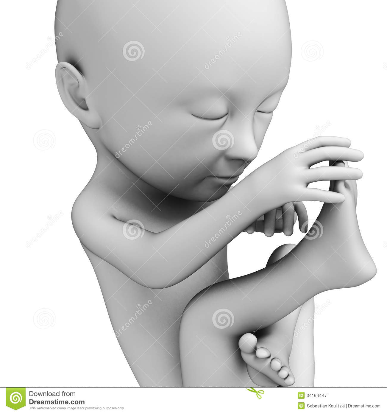 3d rendered illustration of a fetus  month 7 Fetus Illustration