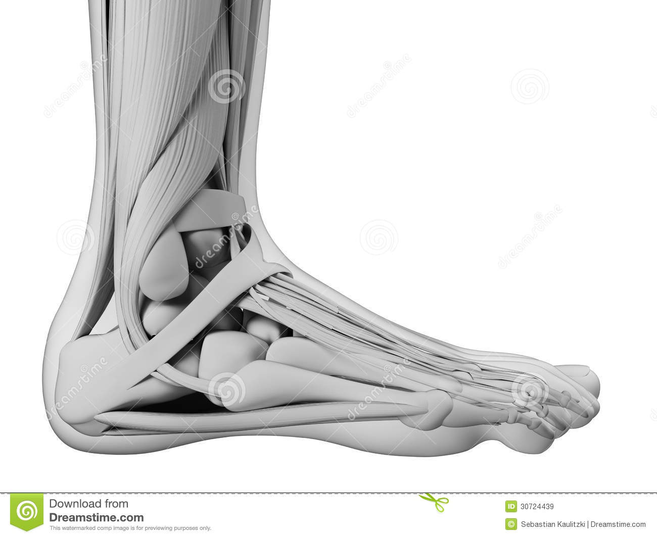 foot anatomy coloring pages - photo#35