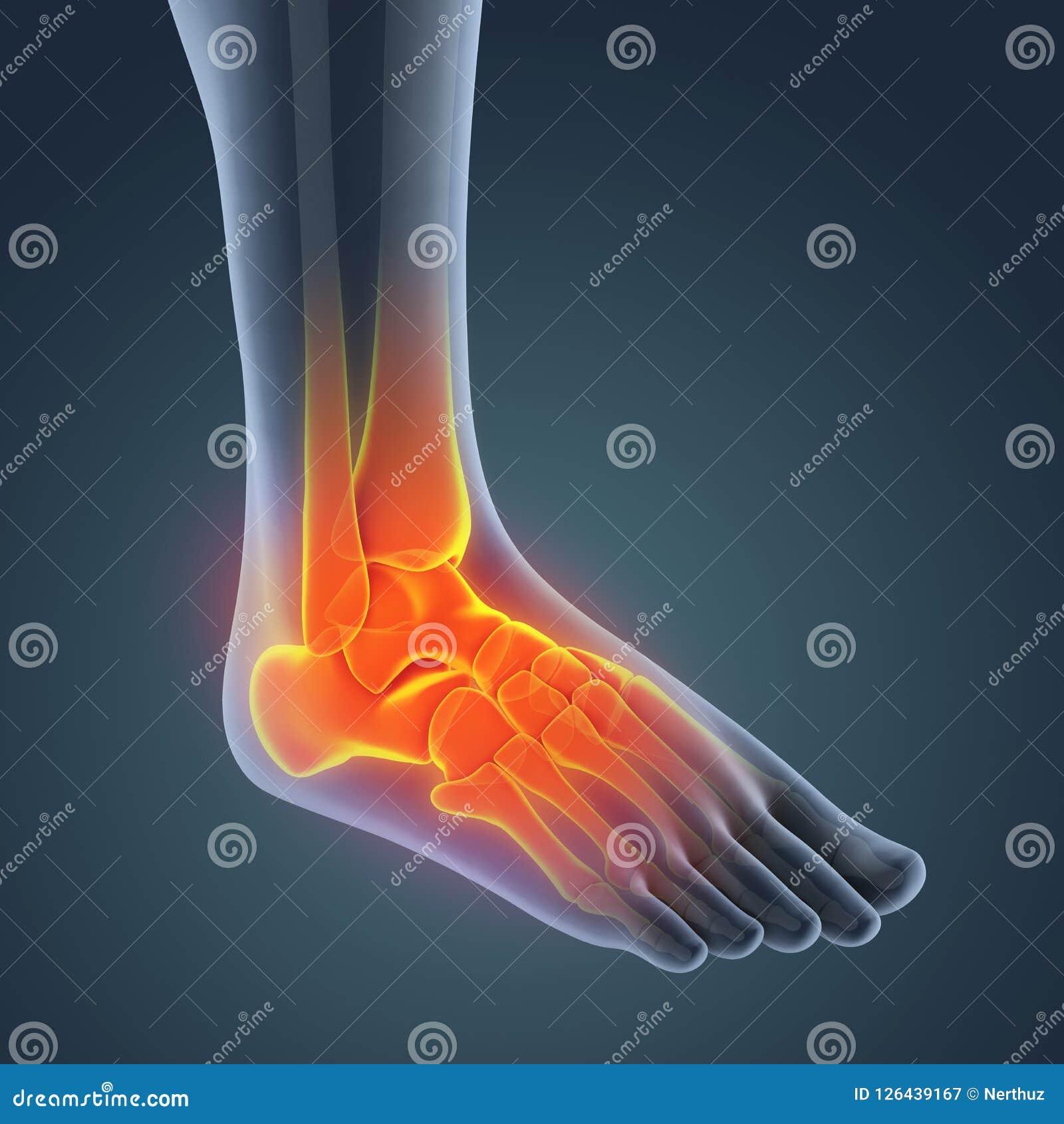 Human Foot Anatomy Illustration Stock Illustration - Illustration of ...