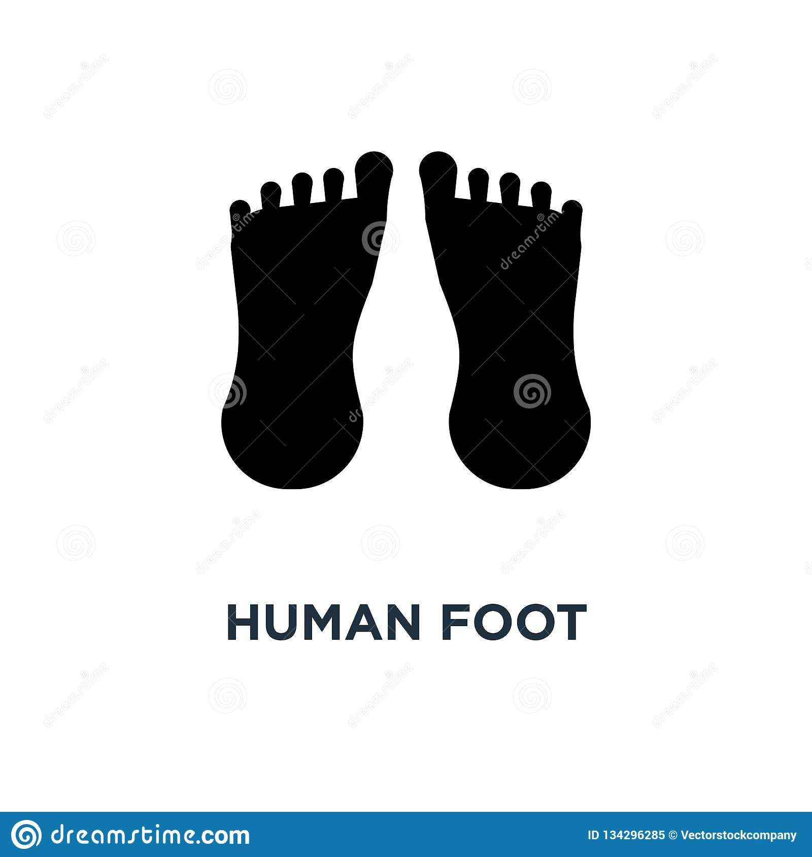 Human foot icon. Simple element illustration. Human foot concept