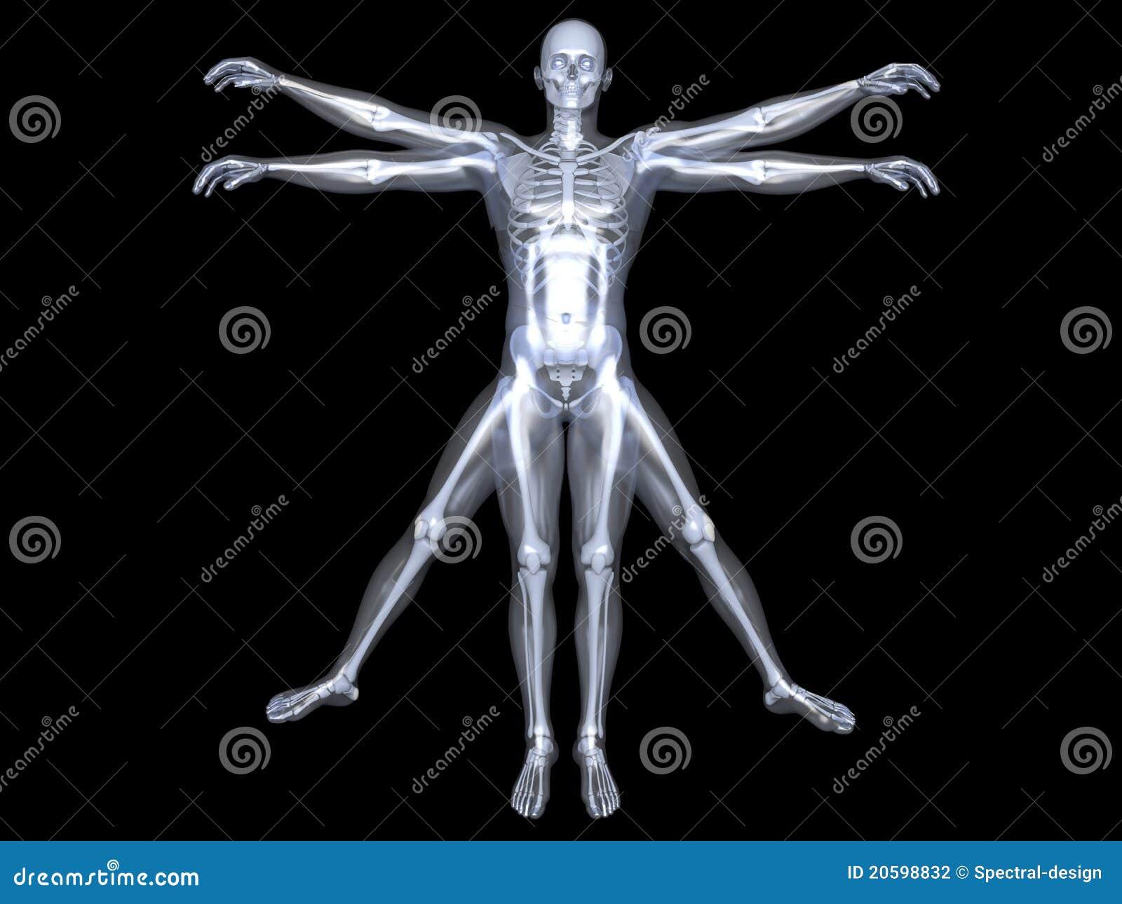 Human Form Stock Photography - Image: 20598832