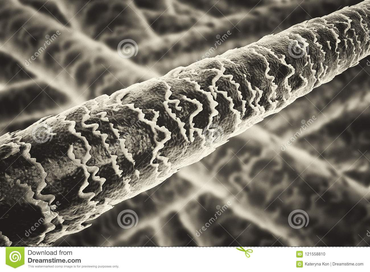 Human Hair Under Microscope Stock Illustration Illustration Of