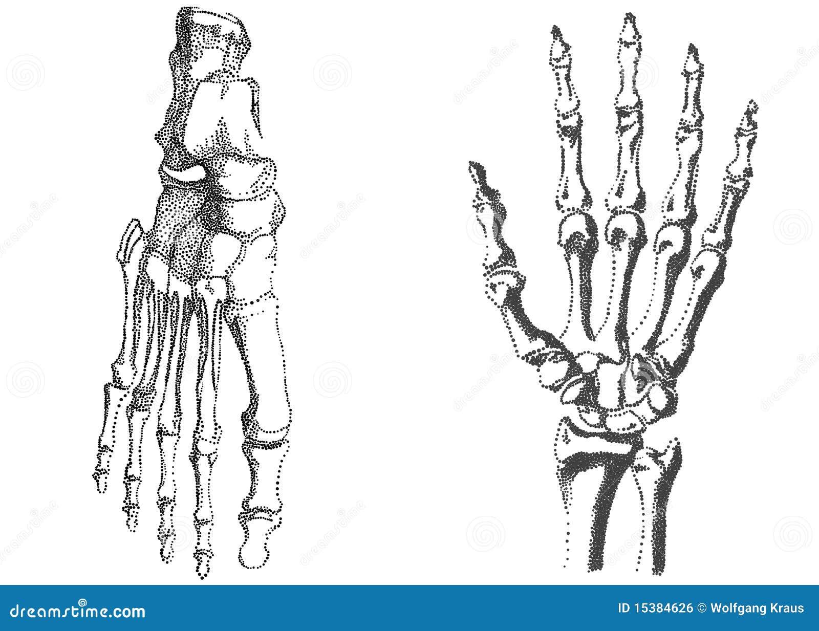 Тату руки скелета на руке