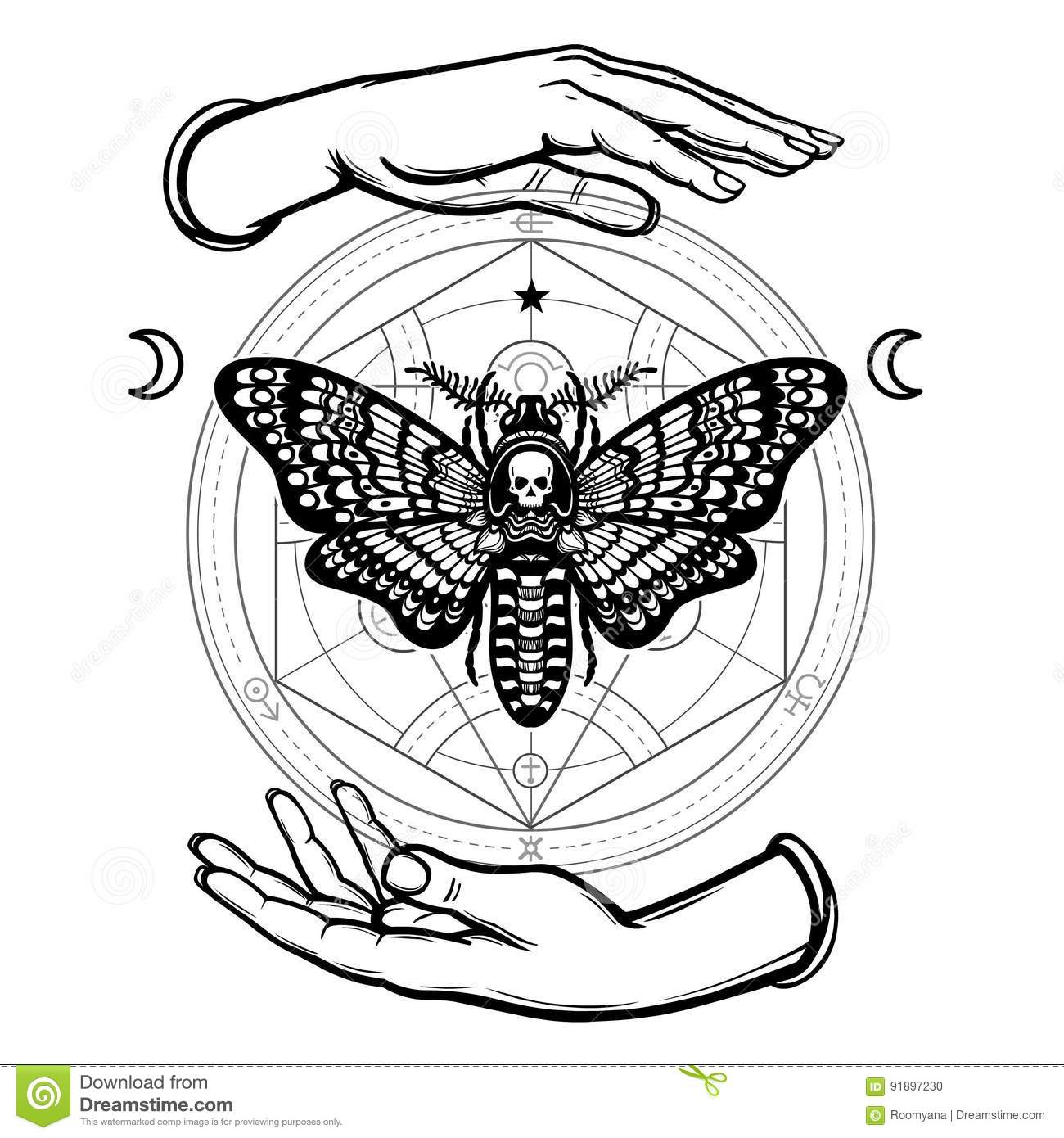 Human Hands Hold A Moth The Dead Head Alchemical Circle Symbols Of