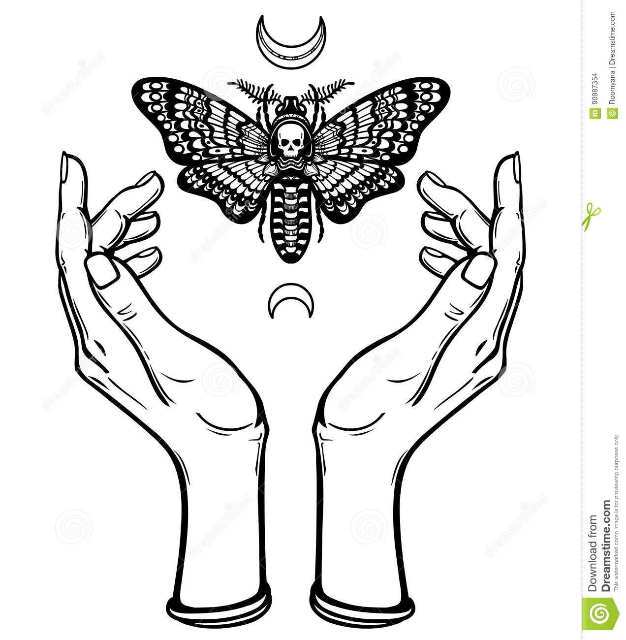 Human Hands Hold A Moth The Dead Head Stock Vector