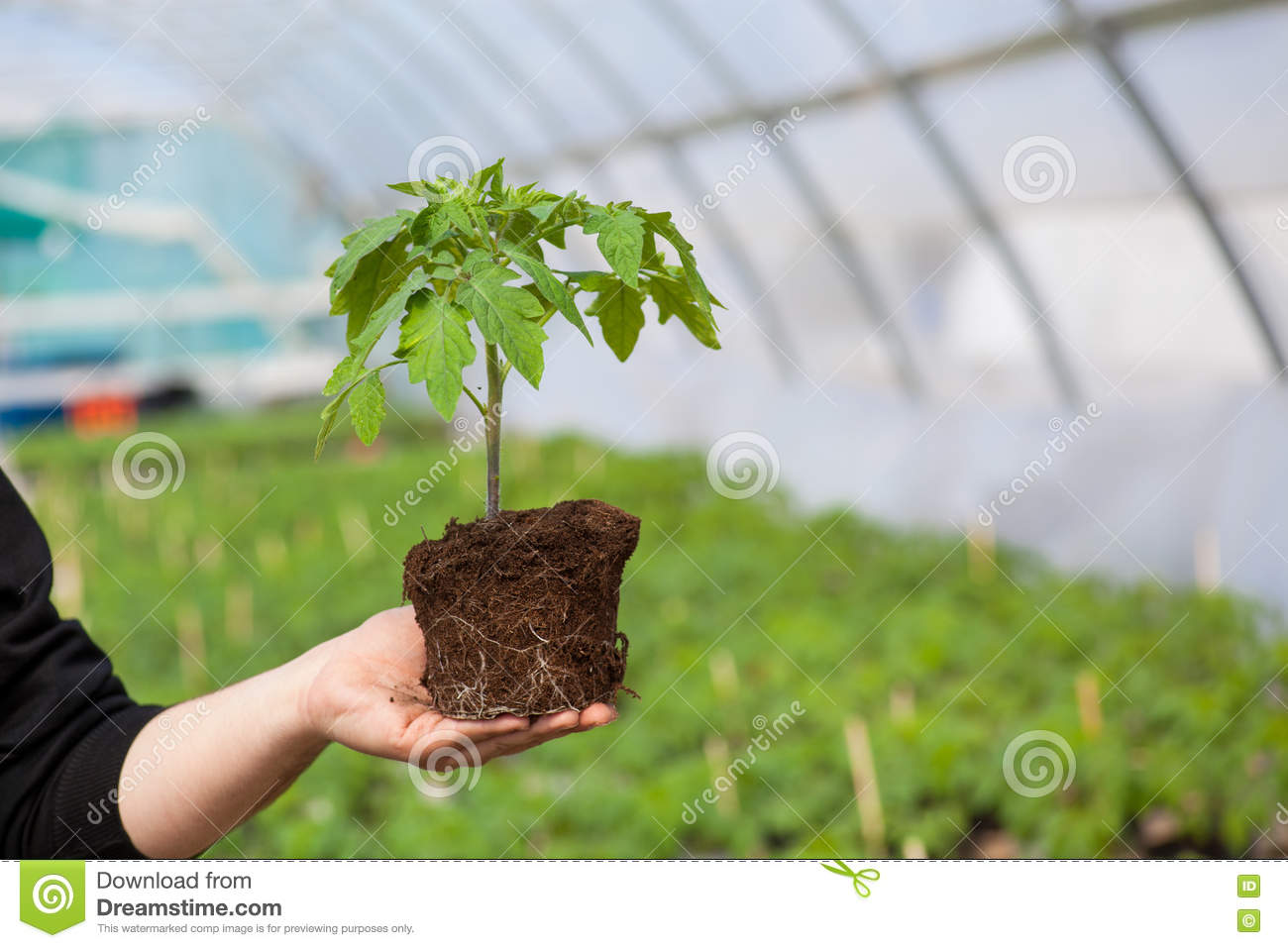 Human hands holding young plant with soil over blurred nature background. Ecology World Environment Day CSR Seedling Go