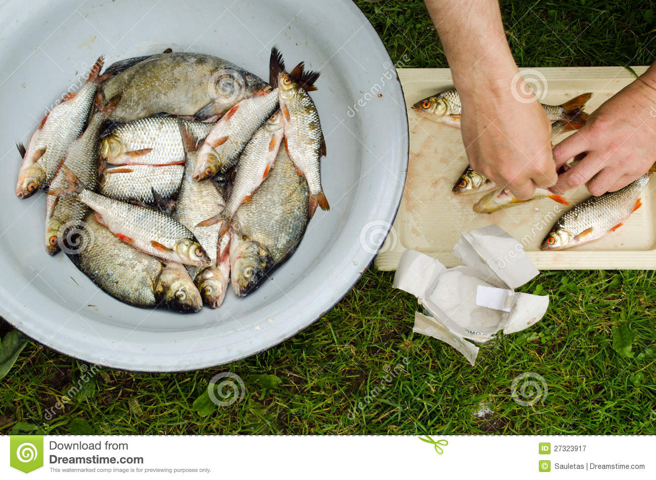 Human hands salt fish for food bream roach stock image for Saltwater fish food