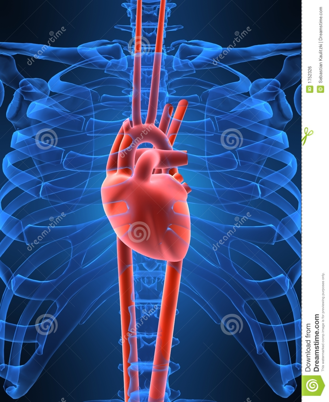 Human heart stock illustration. Image of rate, education ...