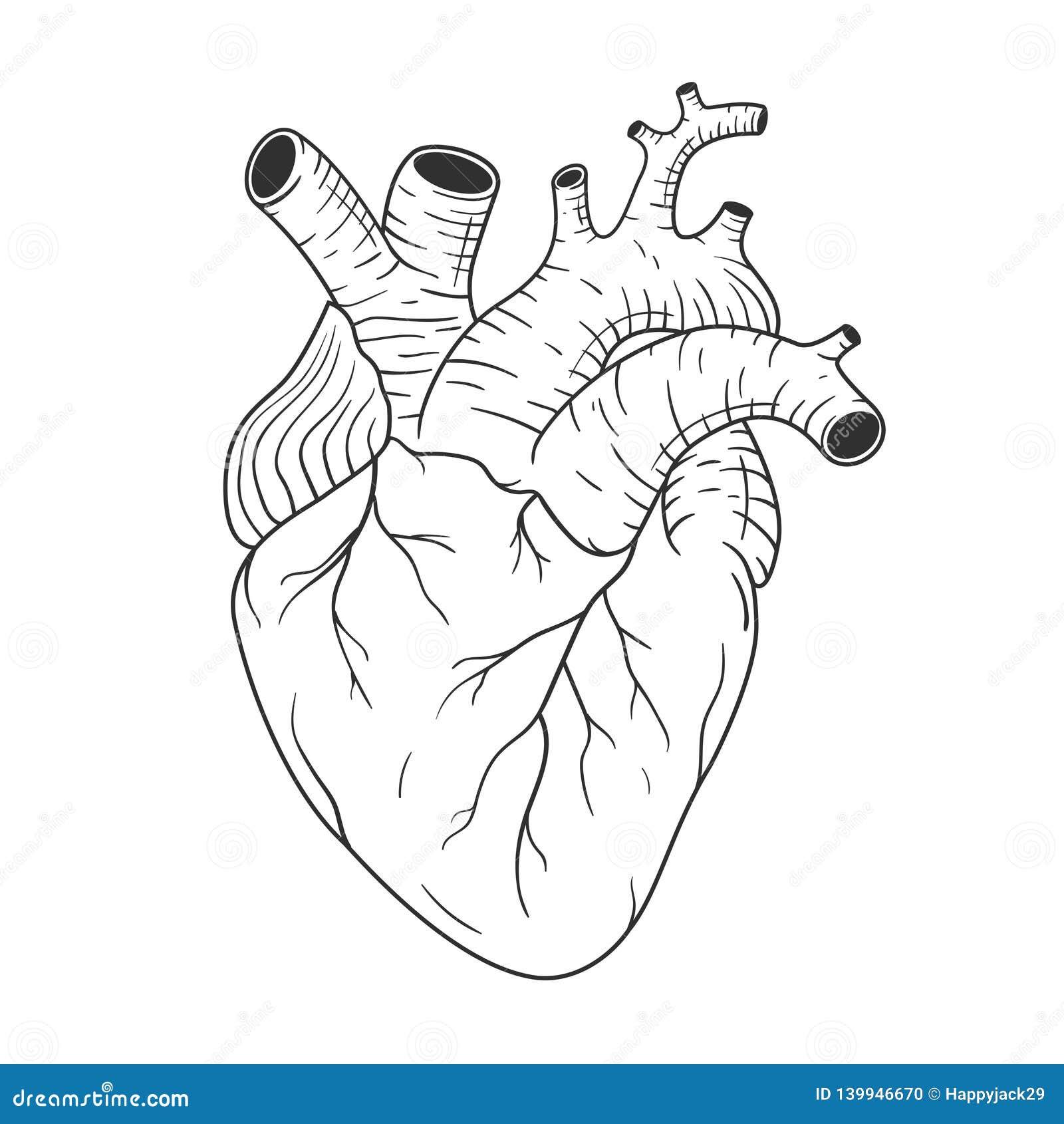 Human Heart Black White Stock Illustrations 10 932 Human Heart Black White Stock Illustrations Vectors Clipart Dreamstime